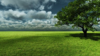 lonely-green-tree-3113